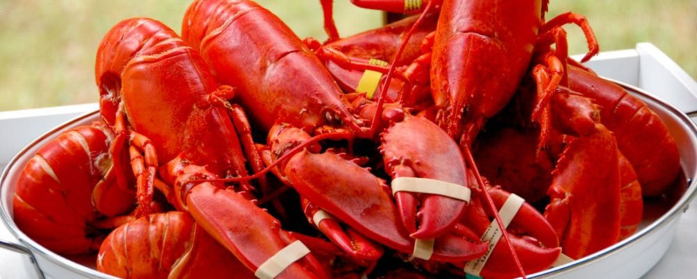 TLC Lobsterfest